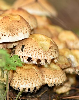 Fungi 2019 - 303
