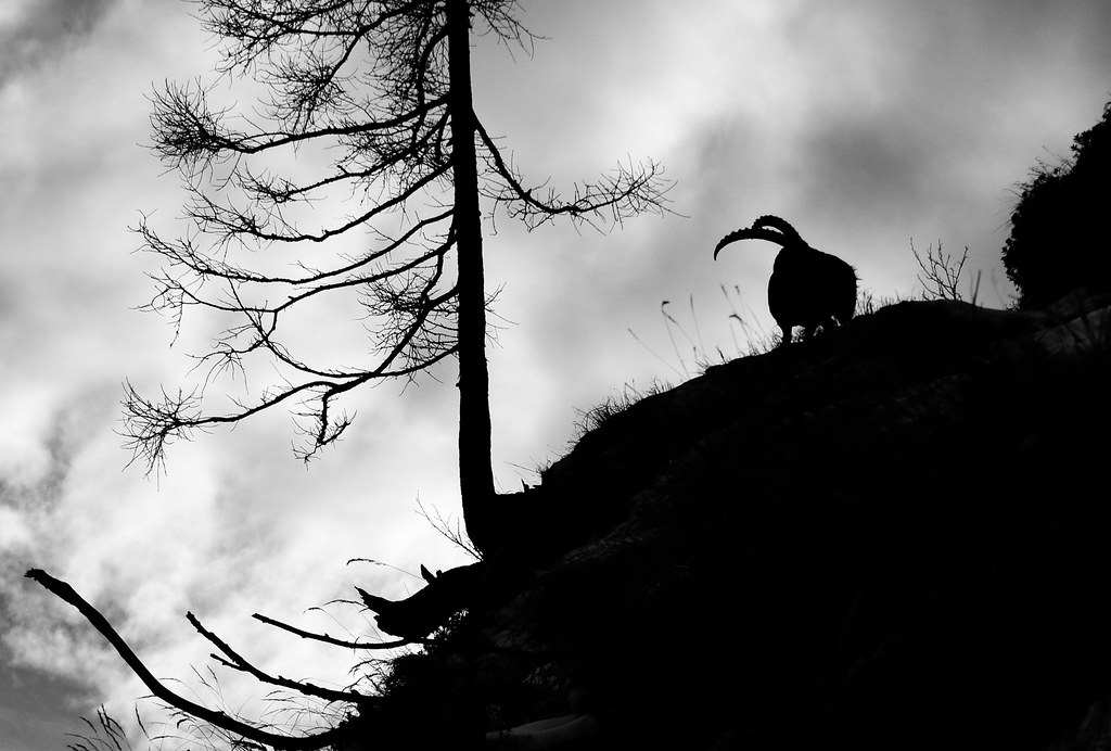 Ombres et cornes - shadow and horns