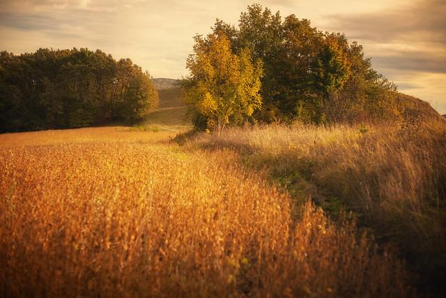 autumn time ...