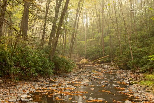 Misty Morn At Dingmans Creek_0955