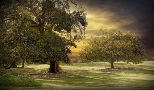 topaz textures landscape trees