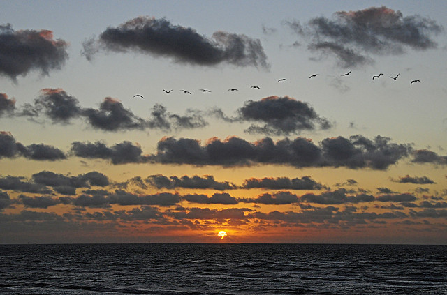 Sunrise and Pelicans - Mustang Island