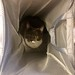 Crick in the laundry basket
