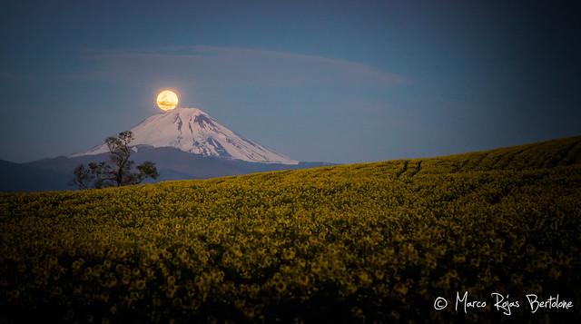 Erupción Lunar