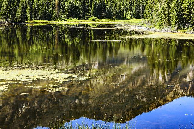 Swamp Lake Fen 1