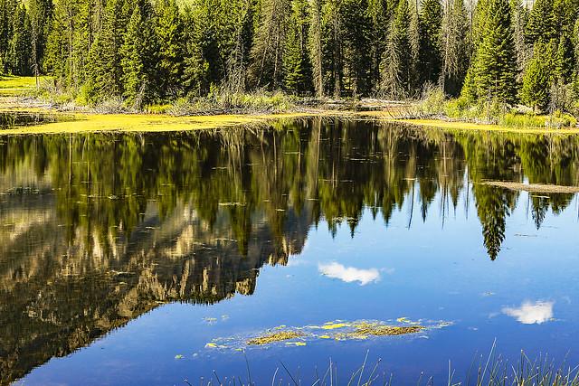 Swamp Lake Fen 2