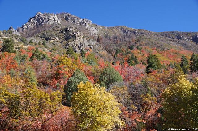 Mt. Nebo Autumn