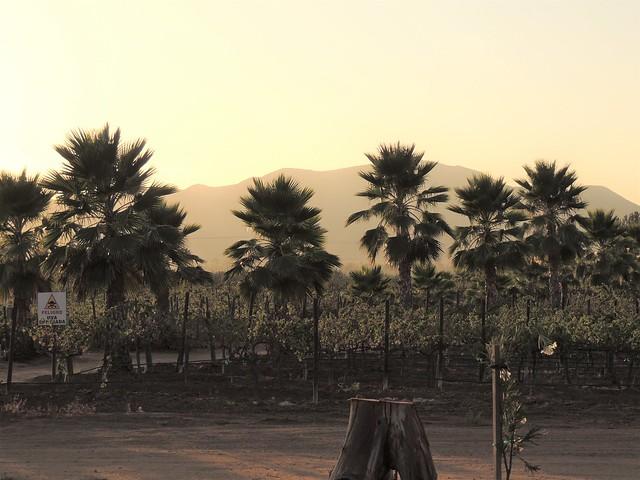 Valle de Guadalupe, Baja Califronia, Mexico