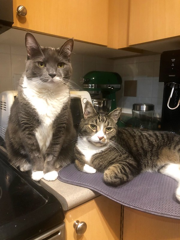 Crick & Watson know that the treats are in the cupboard right above them