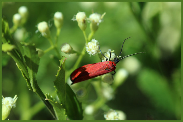 G51A7862 Unidentified Moth