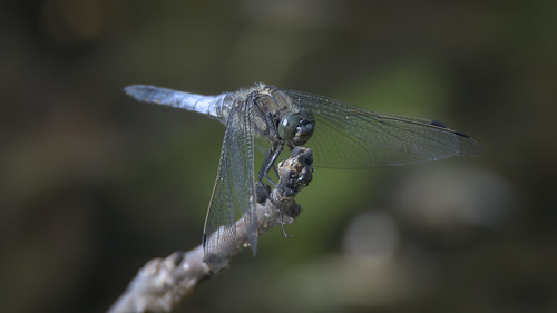 a dragonfly on a branch over a lake