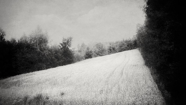 abscapes/ paysage reduced XX