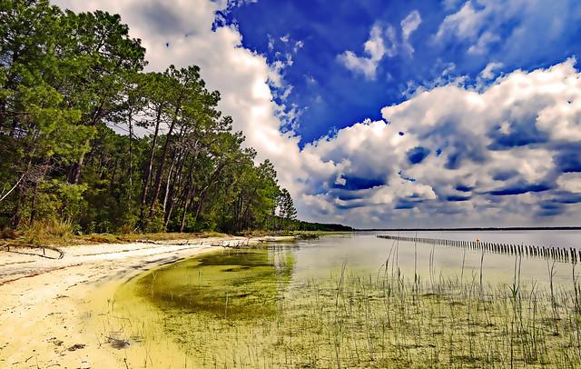 Aux pins et à l'eau