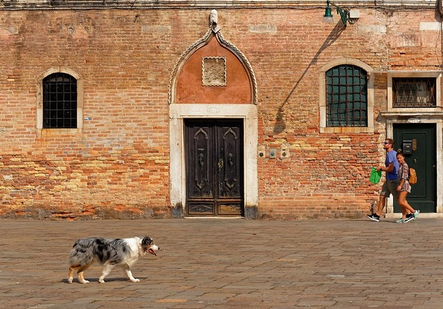 Venezia / Campo Santa Maria  Formosa / The Dog