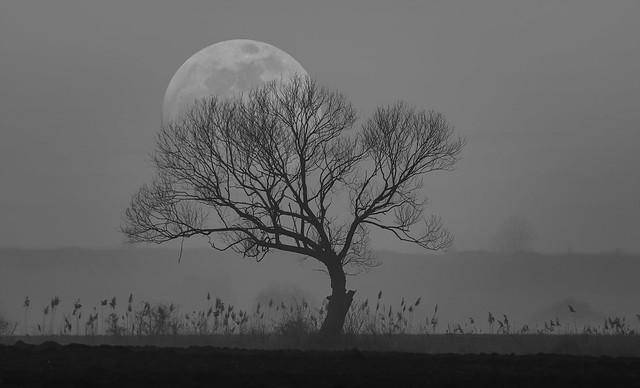 Moonrise [B&W Edition]