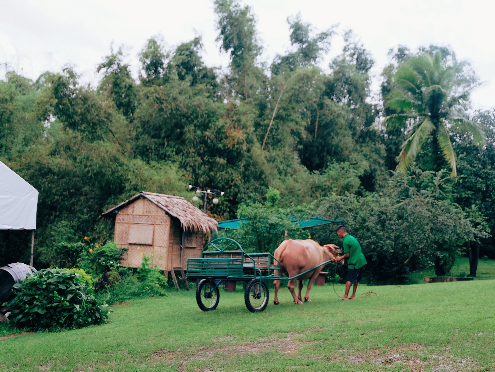Staycation at Terra Verde EcoFarm: Agri-Tourism Farm