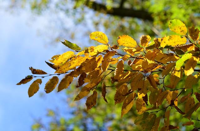 Munich - Autumn Leaves