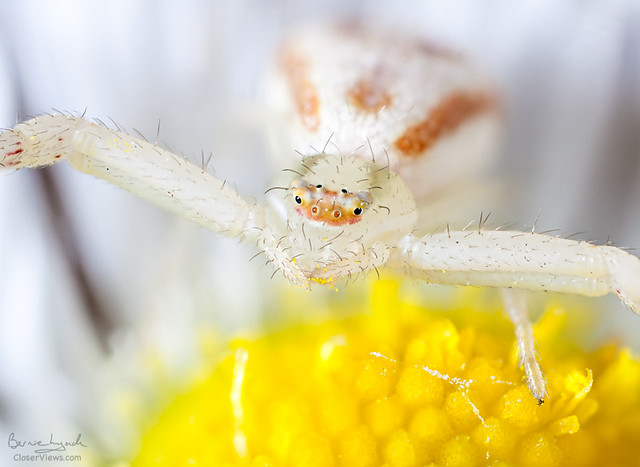 Little Flower Prowler