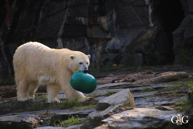 Besuch Tierpark Friedrichsfelde 13.10.201942