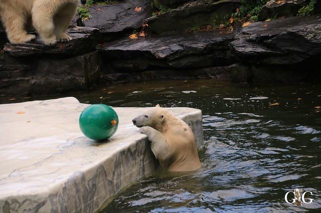 Besuch Tierpark Friedrichsfelde 13.10.2019161