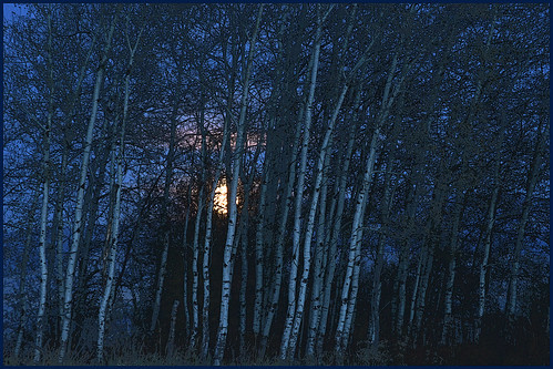 Moon and Aspens / Bell Crossing