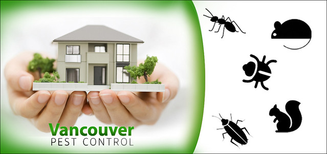 Experience the best pest control in Vancouver