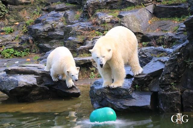 Besuch Tierpark Friedrichsfelde 13.10.2019139