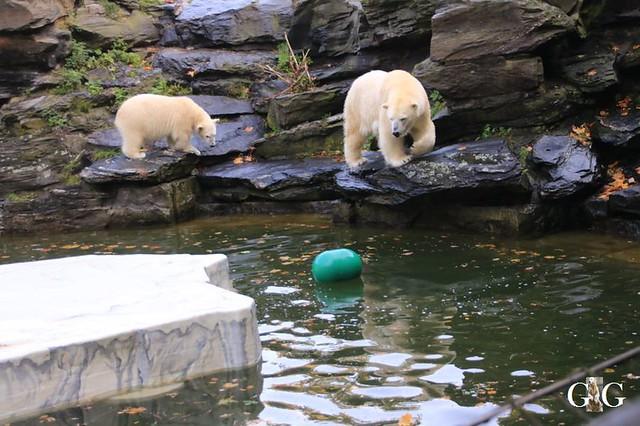 Besuch Tierpark Friedrichsfelde 13.10.2019105