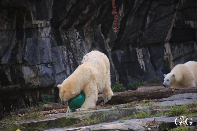 Besuch Tierpark Friedrichsfelde 13.10.201958