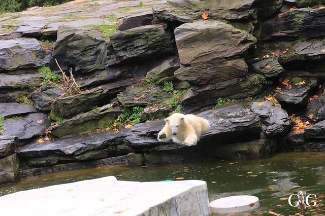 Besuch Tierpark Friedrichsfelde 13.10.2019160