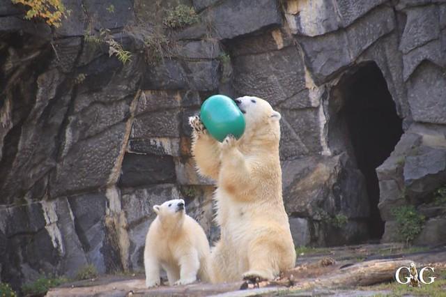 Besuch Tierpark Friedrichsfelde 13.10.201961