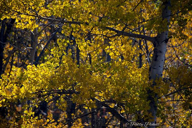 autumn along Kelly's canyon Idaho