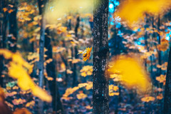 Autumn details | Kaunas #286/365