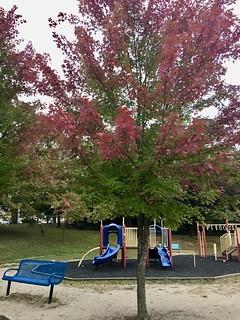 At the neighborhood playground