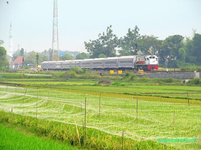 3rd class passenger train passing Prambanan