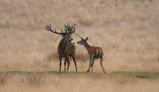 No my dear, you can't eat my outfit........... Red-Deer-7459