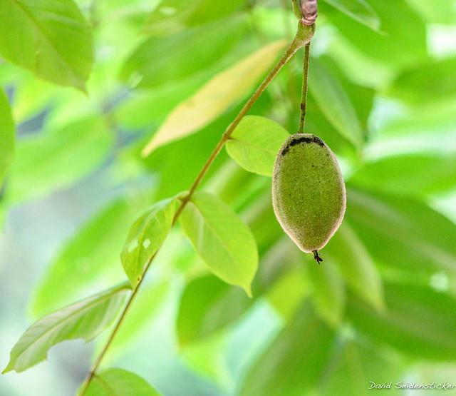 Butternut fruit