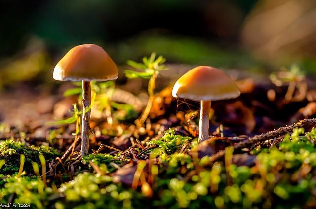 Zwei Pilzchen in der Morgensonne