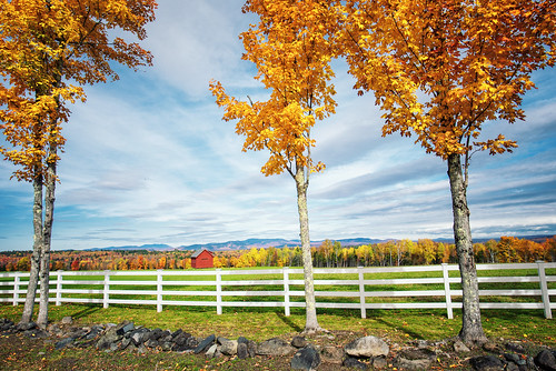 maine fall newengland field trees outdoors outside fence pasture fallcolors view