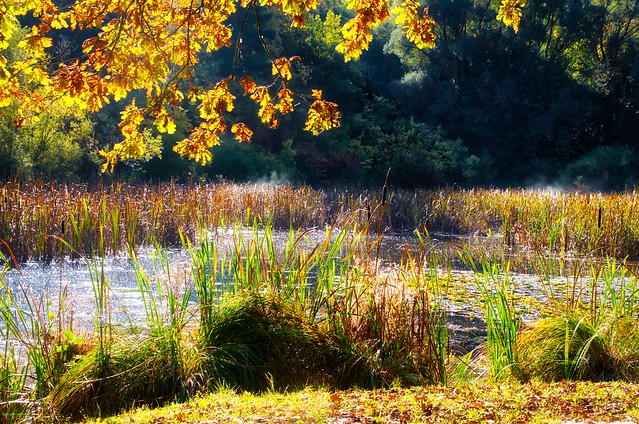 Herbstmorgen am Teich