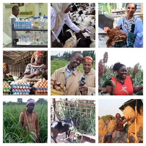 Oct/2019 - A photo mosaic showing how farmers have benefited from the work of ILRI Impact at Scale projects (photo credit: ILRI).