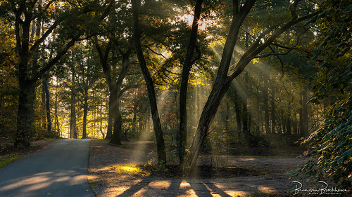 Sun Rays in the woods