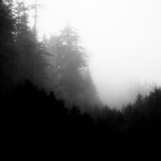 Forest In Fog 015
