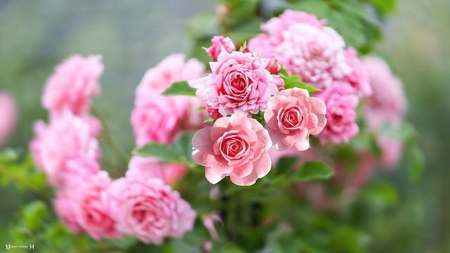 #Pink - 7553