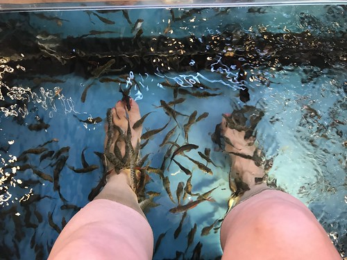 dunked in the fish spa