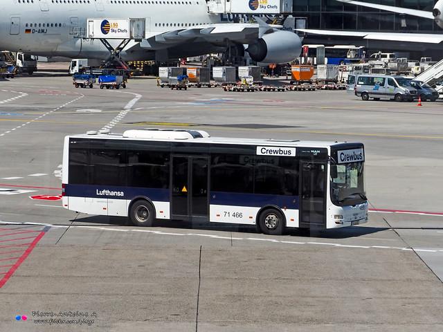 MAN Lion's City M A47 - Lufthansa 71 466