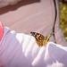 Butterfly-20191013-0080