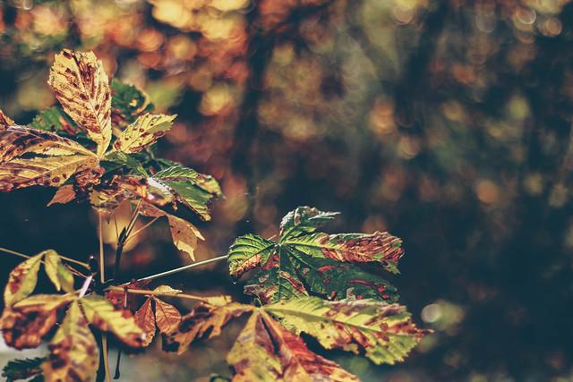 Beautiful Leaf Decay