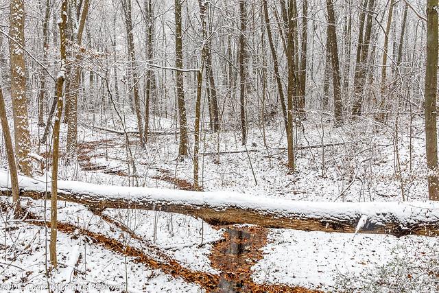 Winter Scenic - 2018-11-18