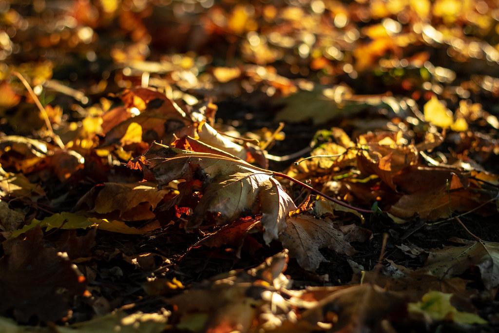 yell_leaf